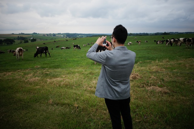 Rich photographing cows