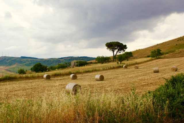 Fields of the Madonie Mountains Near Gangi