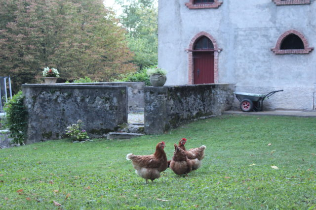 Chickens at the Chateau